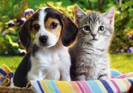 Любимые домашние животные