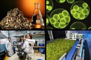 Бионефть из древесины и микроводорослей