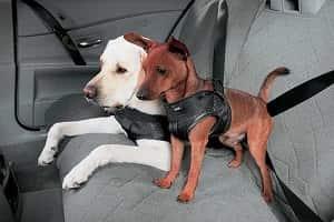 Перевозка-собак-на-заднем-сидении